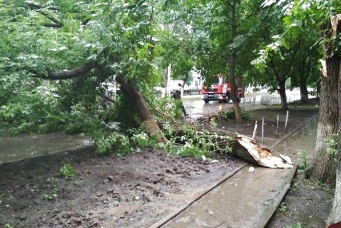 У Кам'янці на проїжджу частину впало дерево (ФОТО)