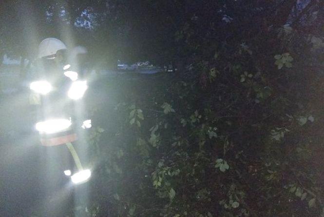 У Кам'янці сильний вітер повалив дерево на проїжджу частину (ФОТО)