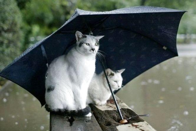 На вихідні у Кам'янці прогнозують дощі