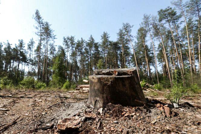 За незаконну порубку дерев житель Кам'янеччини постане перед судом