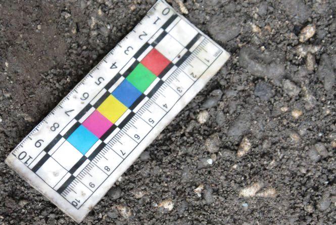 Археологи Кам'янця знайшли рідкісні молюски