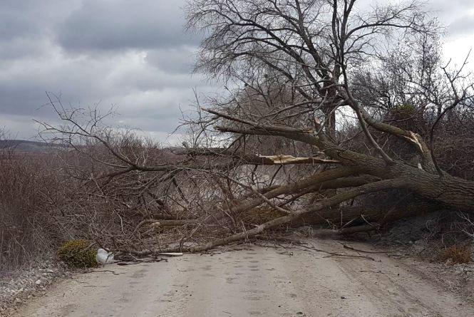Фотофакт: дерево перекрило дорожній рух у селі Вербки